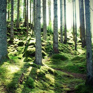 Entdecken Sie den Wald mit den Augen des Profis.