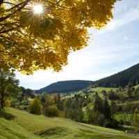 Einfach gut: Unsere Herbstspaziergänge.